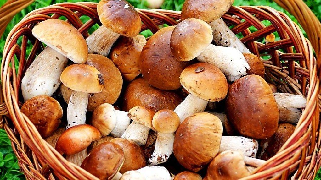 С начала года 7 человек отравились грибами. Пока статистика без летальных исходов