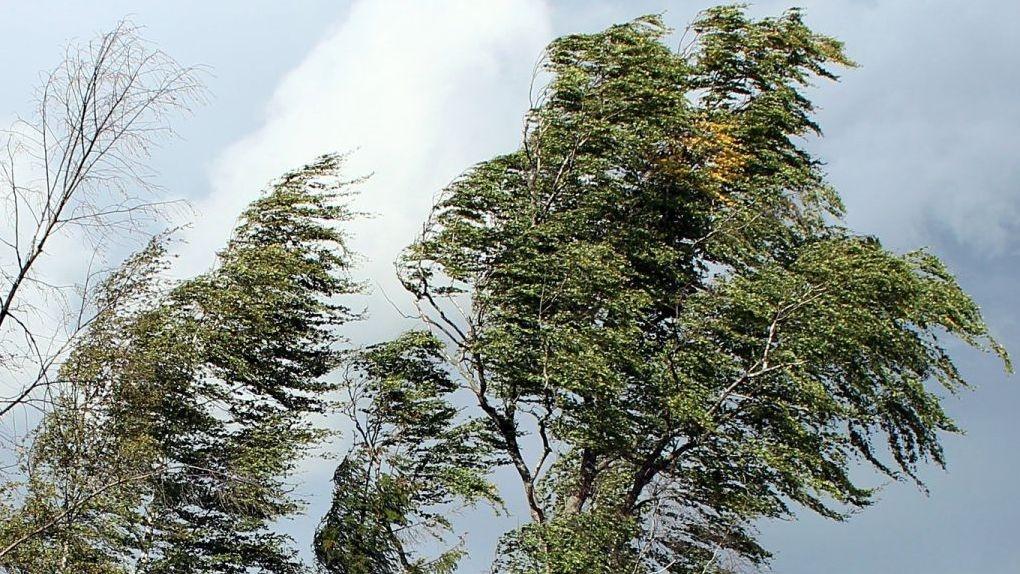 В первый день июля на территории области прогнозируются порывы ветра до 15-20 метров в секунду