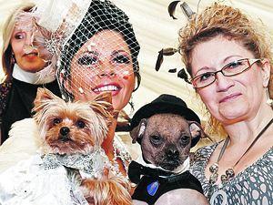 Британка потратила на собачью свадьбу 20 тысяч фунтов