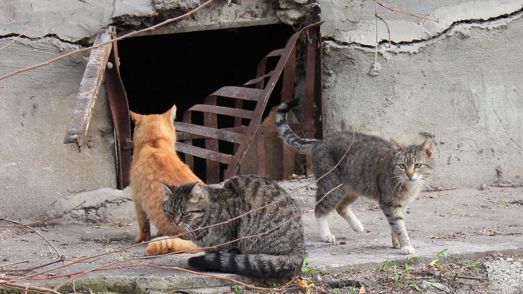 Посторонним вход не воспрещён: в России хотят открыть подвалы для кошек