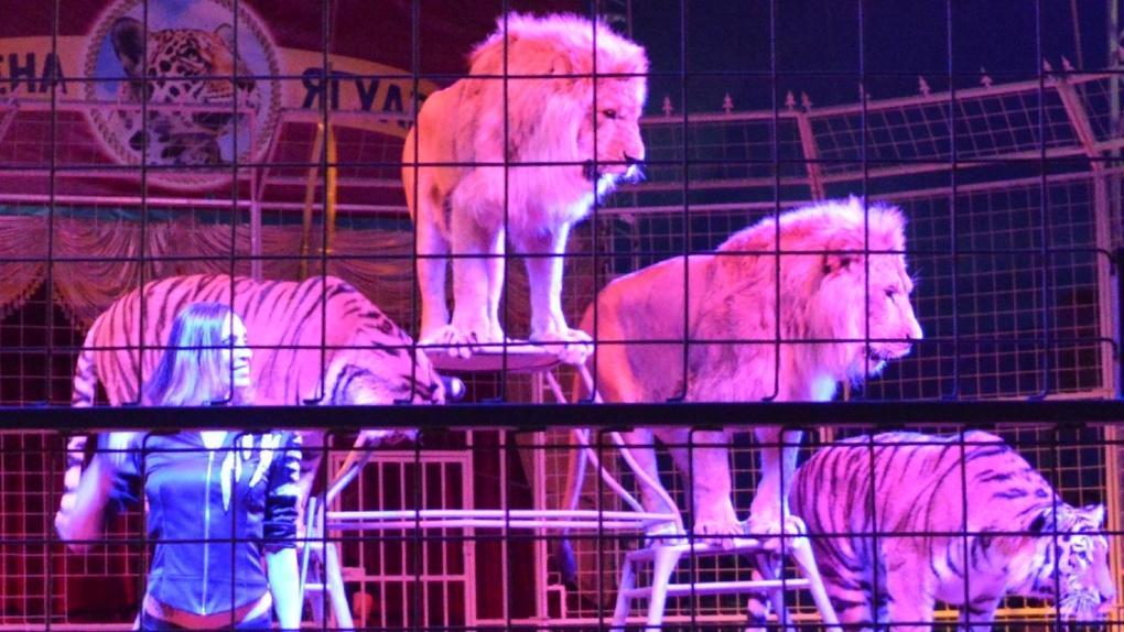 Представления московского цирка-шапито «Арена-Ягуар» станут лучшим подарком для тамбовской детворы