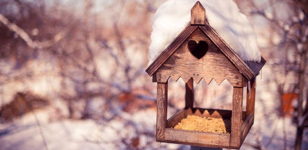 Тамбовчан приглашают покормить птиц