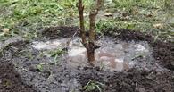 Тамбовчане высадили 150 молодых деревьев