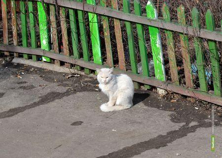 На Тамбовщине могут построить крематории для животных