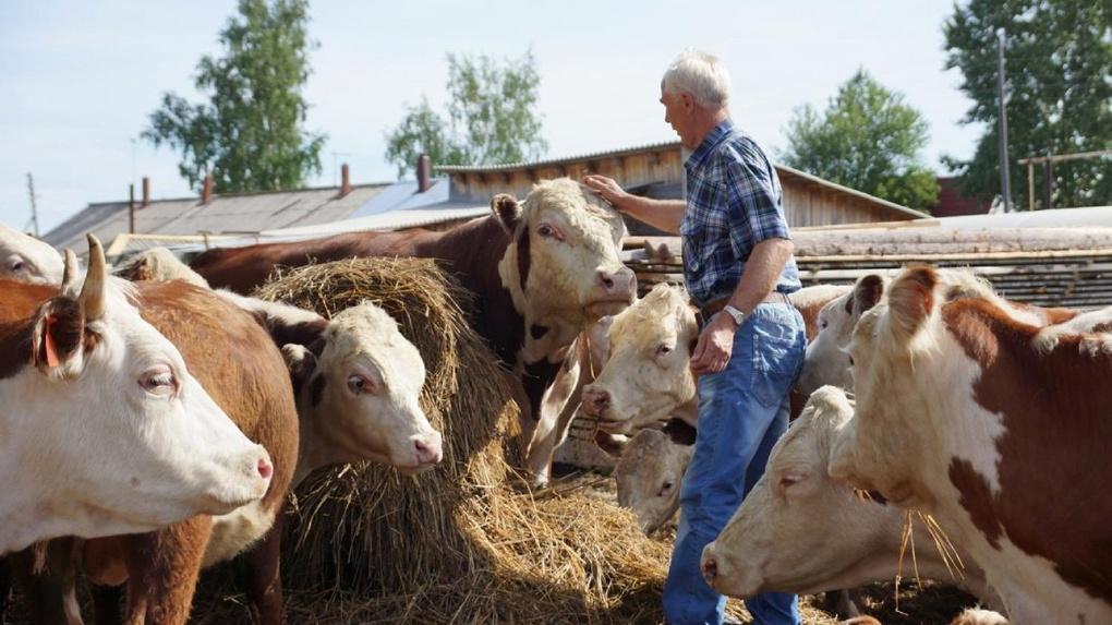 Тамбовские фермеры получили финансовую поддержку от государства
