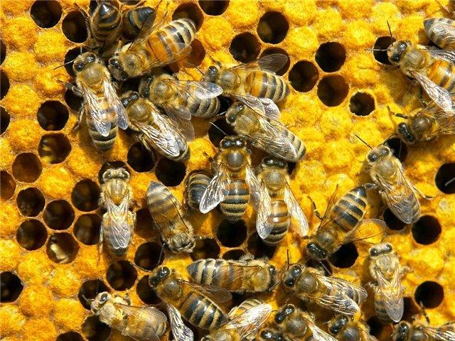 В США перевернулся грузовик с 20 млн пчел