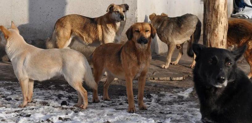 Бездомные собаки в Тамбове уже 5 раз напали на людей