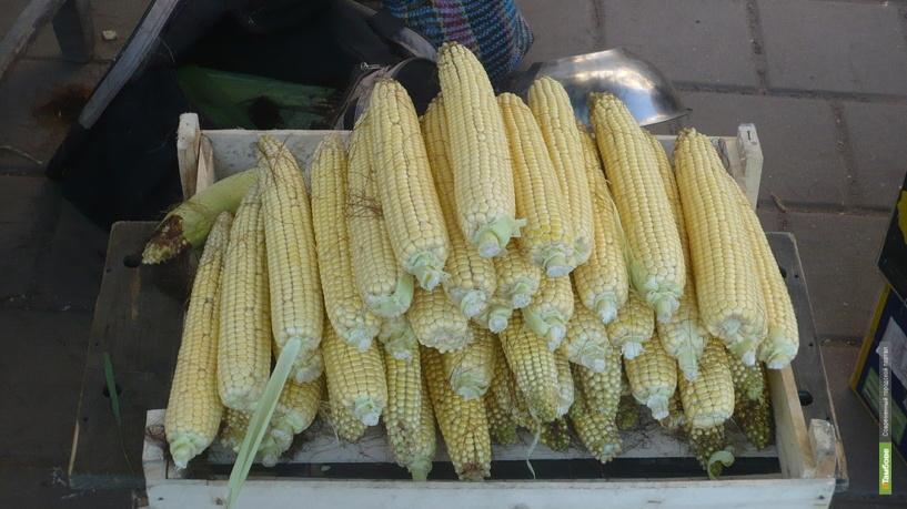 На Тамбовщине выросли темпы сельхозпроизводства