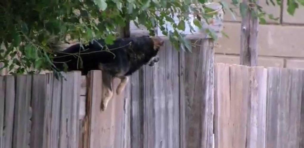Инцидент с собаками, напавшими на людей у «Знамёнки»: новые подробности