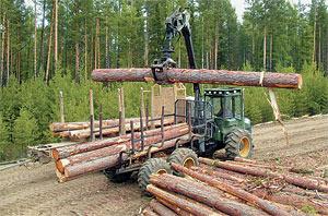 Тамбовчане воруют лес