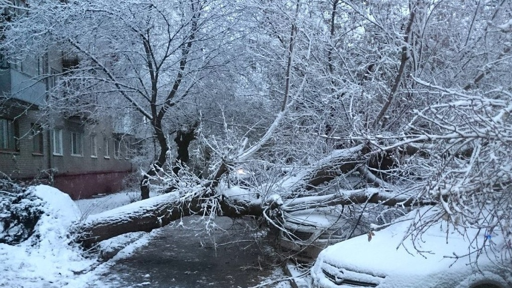 Ветер, мокрый снег и гололёд: южный циклон заставит тамбовчан сидеть дома в выходные