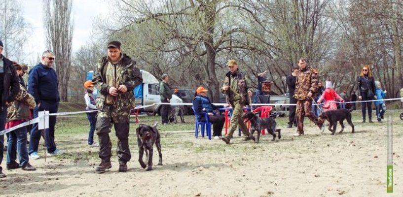 Легавые, ретриверы, спаниели: в Тамбове пройдёт выставка подружейных собак