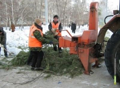 Тамбовские власти собирают новогодние елки