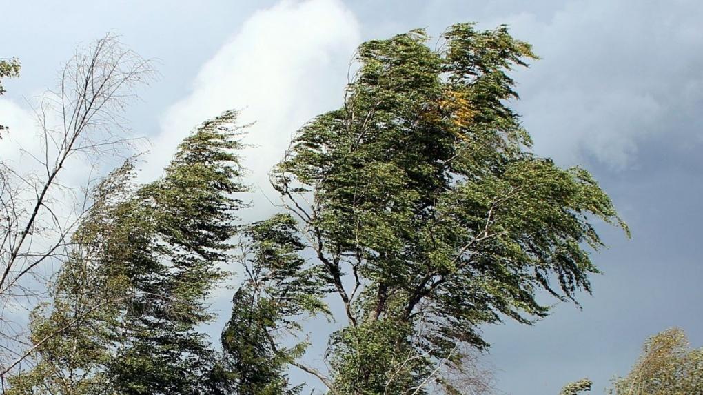 Экстренное предупреждение: в Тамбовской области ожидается усиление ветра и гроза