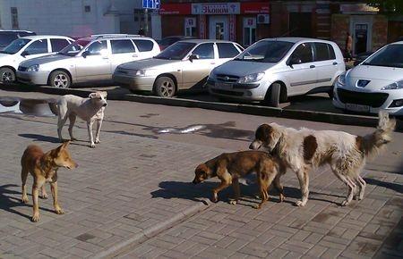 Бешеные животные покусали 115 тамбовчан