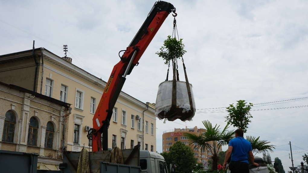 На Тамбовском Арбате посадили пальмы