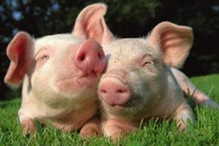 """Компания""""Русагро"""" открыла один из трёх свинокомплексов на Тамбовщине"""