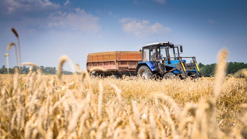 Тамбовская область заняла пятое место в ЦФО по экспорту АПК
