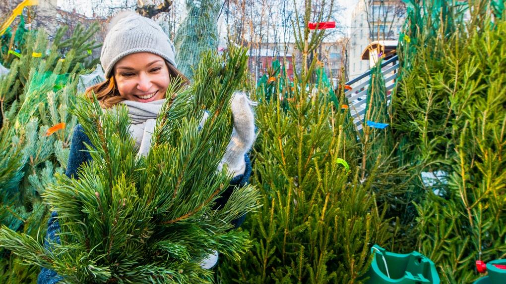 Елочные базары в Тамбове начнут работать 15 декабря