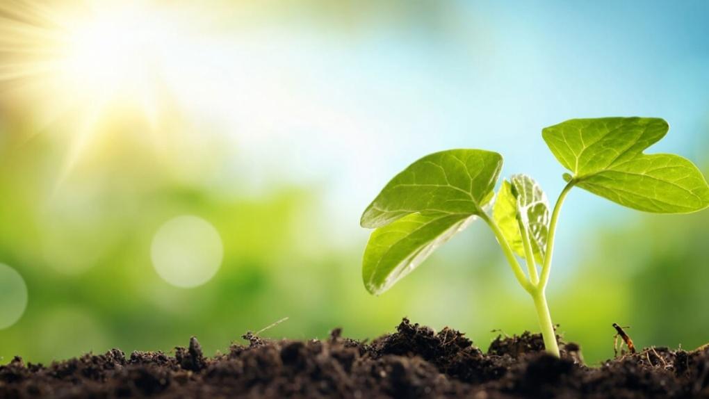 Тамбовская область снова стала лидером экологического рейтинга