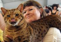 В Тамбове пройдет выставка кошек