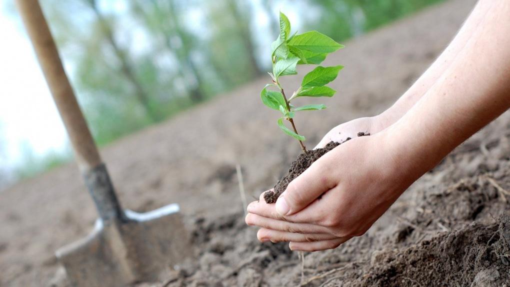 В районе улиц Островитянова, Новолагерной и Серпуховской появились молодые деревья