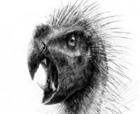 Ученые из Чикаго нашли останки саблезубого попугая