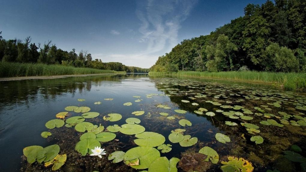 Наш регион снова возгласил национальный экологический рейтинг