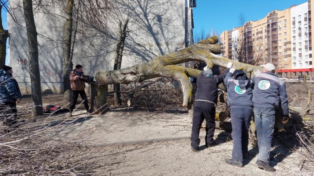 В Тамбове началась опиловка аварийно-опасных деревьев